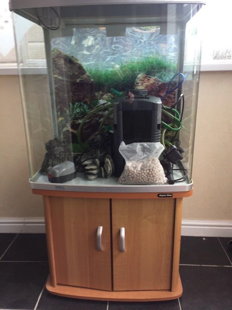 Aquarium fish tank northamptonshire - Fish Tank
