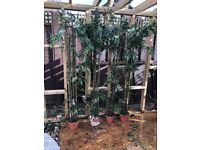 Different Artificial plants tree fake plant flowers 6 foot tall 10 available £50 each can deliver