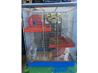 2 female hamsters and large cage