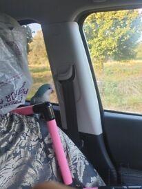 Lost a Blue Quaker Parrot