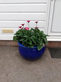 Extra Large Blue Ceramic Pots