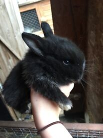 2 baby male rabbits for sale
