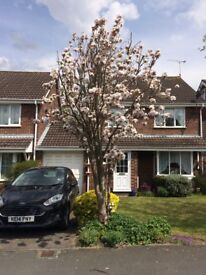 Fully furnished, newly decorated link detached 3 bed rooms house to rent,