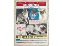 REWARD FOR OUR MISSING CAT