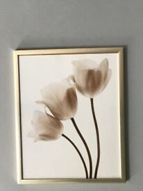 Framed picture of tulips