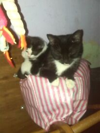kitten and a cat for sale