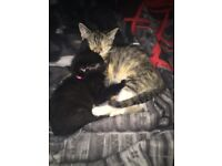 2 beautiful bouncy kittens need a home together