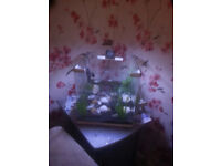 for sale small fish tank with heater and air pump £25