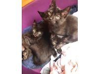 Kittens for loving homes