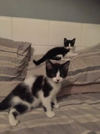 Boy & girl kitten looking for loving family