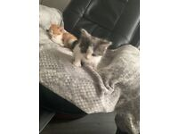 Very friendly kittens for sale