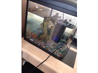 Fish Tank with accessories £50 IF PURCHASED TODAY