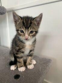 3 x male kittens 1 x female kitten