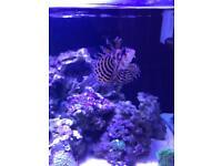 Various marine fish