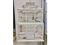 2 male zebra finch with cage