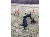 Dog Walking - Bromley, Bickley & Chislehurst