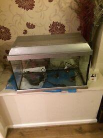 2 foot fish tank