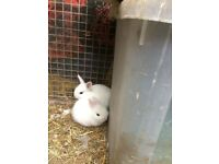 Dwarf beautiful baby rabbit