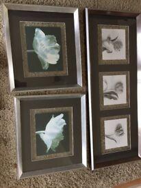 3 housing unit tulip pictures