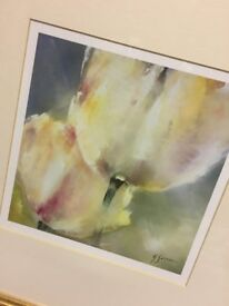 Print of Cream Tulips
