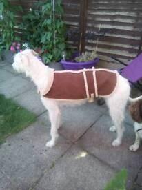 Free dog coat