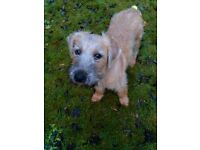 Kc reg wheaten terrier 4 months. Includes bed, collar, lead, cage. £400.