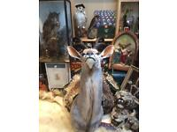 Antique and modern taxidermy skulls curios display pieces
