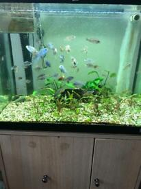 FISH TANK WITH STAND AND FISHES FOR SALE