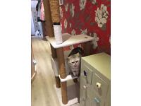 Huge Cat Scratching Post for Free!