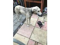 Dog stolen