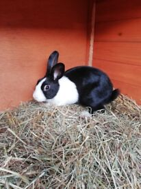Rabbits and hutches for sale