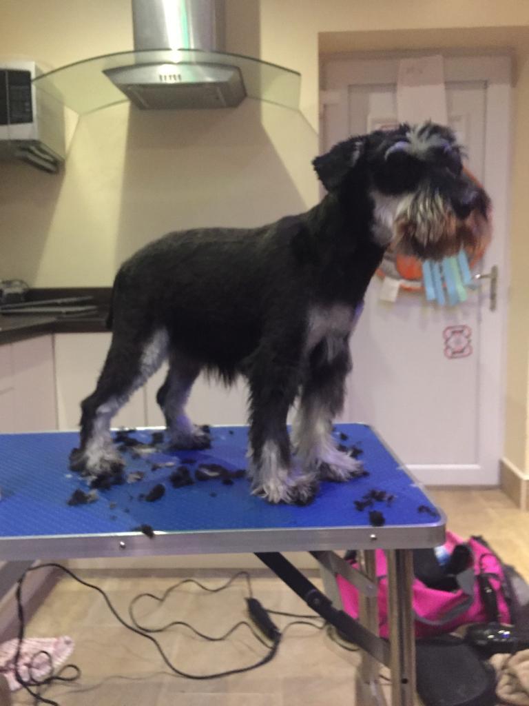Ash S Woof Cuts Mobile Dog Grooming In Sunderland Tyne
