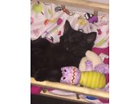 Young kitten looking for forever home