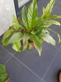 Lovely indoor plant