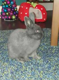 Bunny and indoor cage