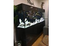 modern fish tank + fish