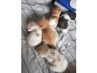 2 boy kittens left