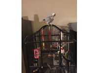 african grey parrot, cage and bag of feed