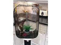 60 LITRE BIORB LIFE BLACK FISH TANK WITH STAND