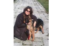 Dog walking & Dog sitting --- Experienced, trustworthy dog walker / dog sitter