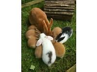 Trelawney wood bunnies