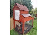 Chicken Hutch and four egg laying chickens all ready to start producing your own fresh eggs