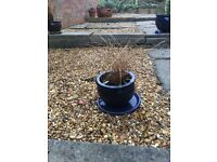 THIS IS A BLUE PLANT POT SIZE 14CM H X 17CM D WITH SAUCER AND PLANT