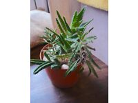 Selection of 4 Succulent House plants in a plastic pot