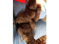 4 pretty kittens for sale