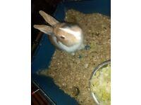 1 year old rabbit