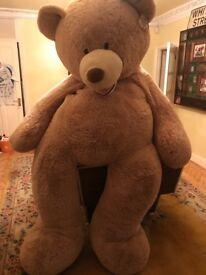 Xxl teddy Bear