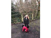 Door-door dog walking service Glasgow south-side