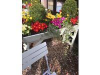Gardener RHS qualified Wantage ,Standlake , Kingston Bagpuize, Faringdon,,all gardening jobs