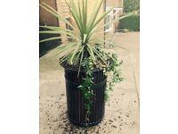 Planter/ fire bin